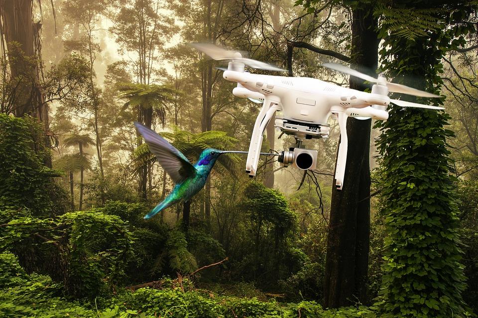 Drone, Aves, Volador, Bosque, Fotomontaje, Madera