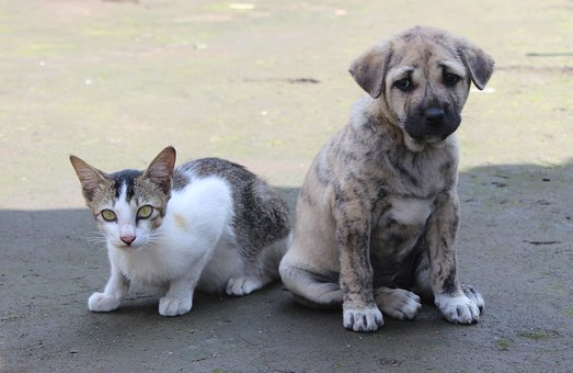 Pet, Cute, Animal, Domestic, Mammal, Dog