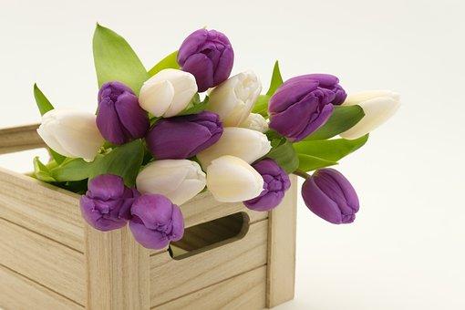 Bouquet, Tulip Bouquet, Tulips, Flowers