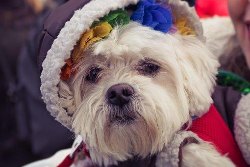 Dog, Animal, Pet, Cute, Animal Portrait