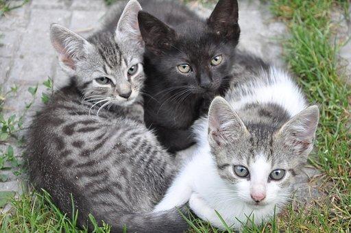 Animal, Cute, Cat, Pet, Kitten
