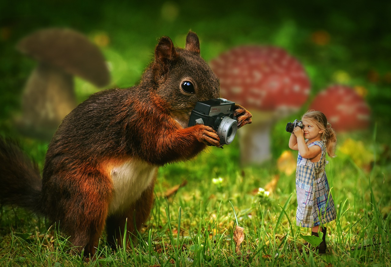 Écureuil, Fille, Caméra, Nature, Des Animaux, Enfant