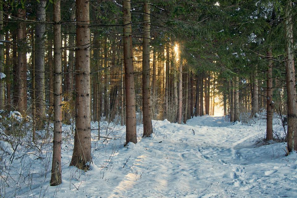 Snow, Trees, Forest, Woods, Woodlands, Hoarfrost