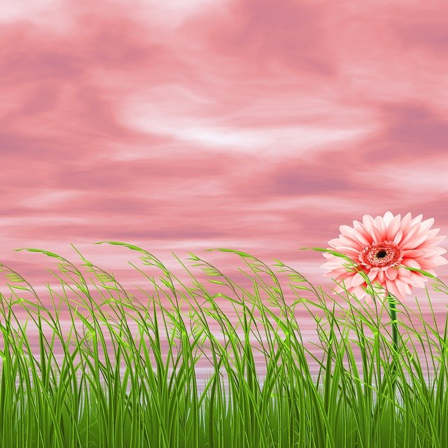 Background Nature Flower Pink · Free Photo On Pixabay