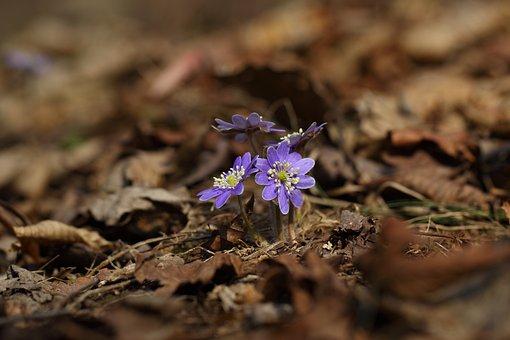 Natur, Utomhus, Växter, Blommor, Löv