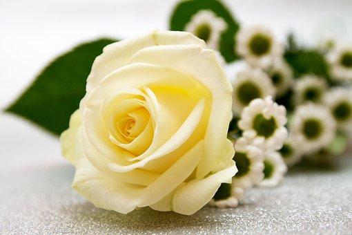 e73ebf692 800+ Free Engagement & Wedding Images - Pixabay