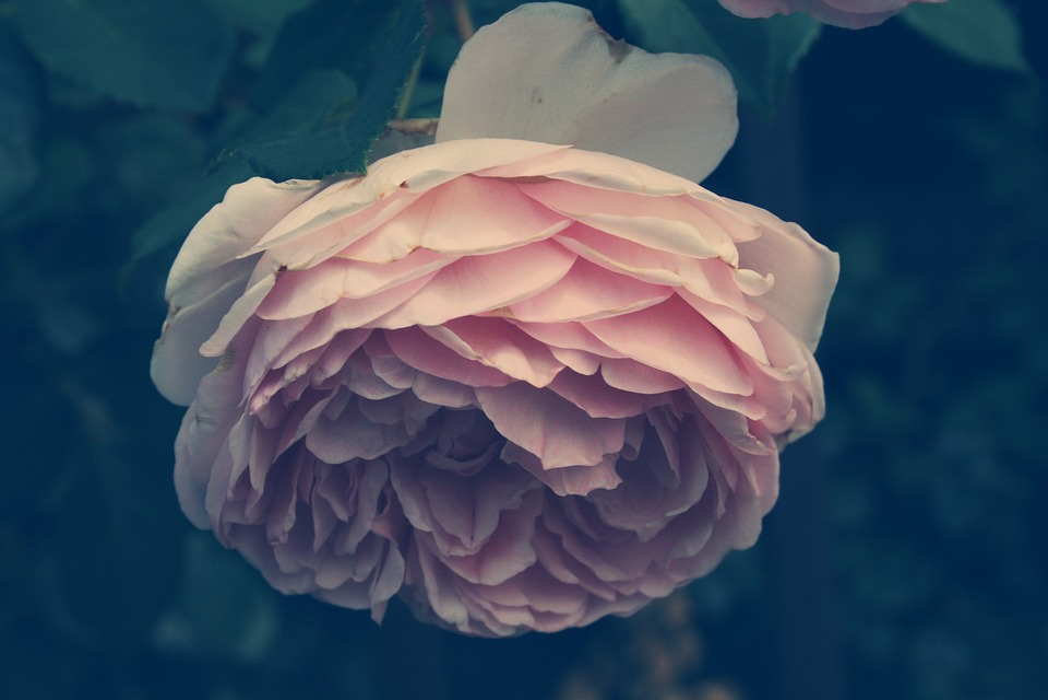 Fleur Plante Nature Photo Gratuite Sur Pixabay