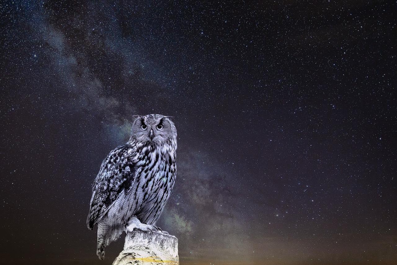 пищевая картинки птицы ночью тем вчера