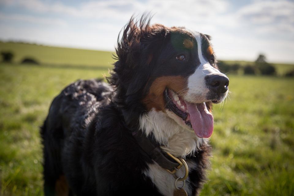 Os 15 melhores cães de companhia para ter por perto quando você mais precisa