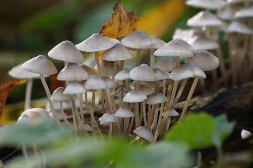 Nature, Fungus, Mushroom, Season, Flora