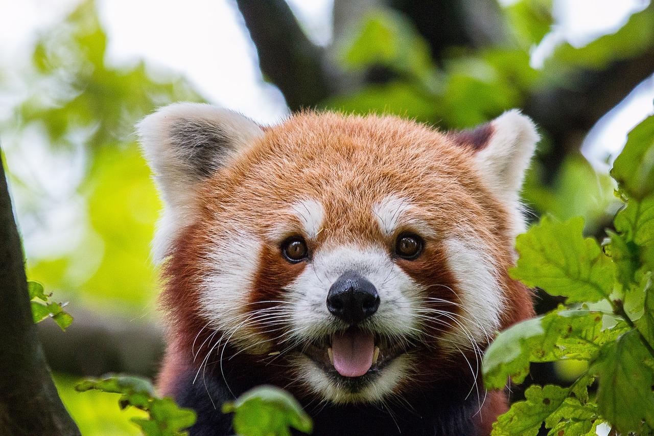Млекопитающие животные фото и название