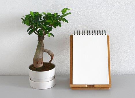 Hoja, Planta, Crecimiento, La Naturaleza