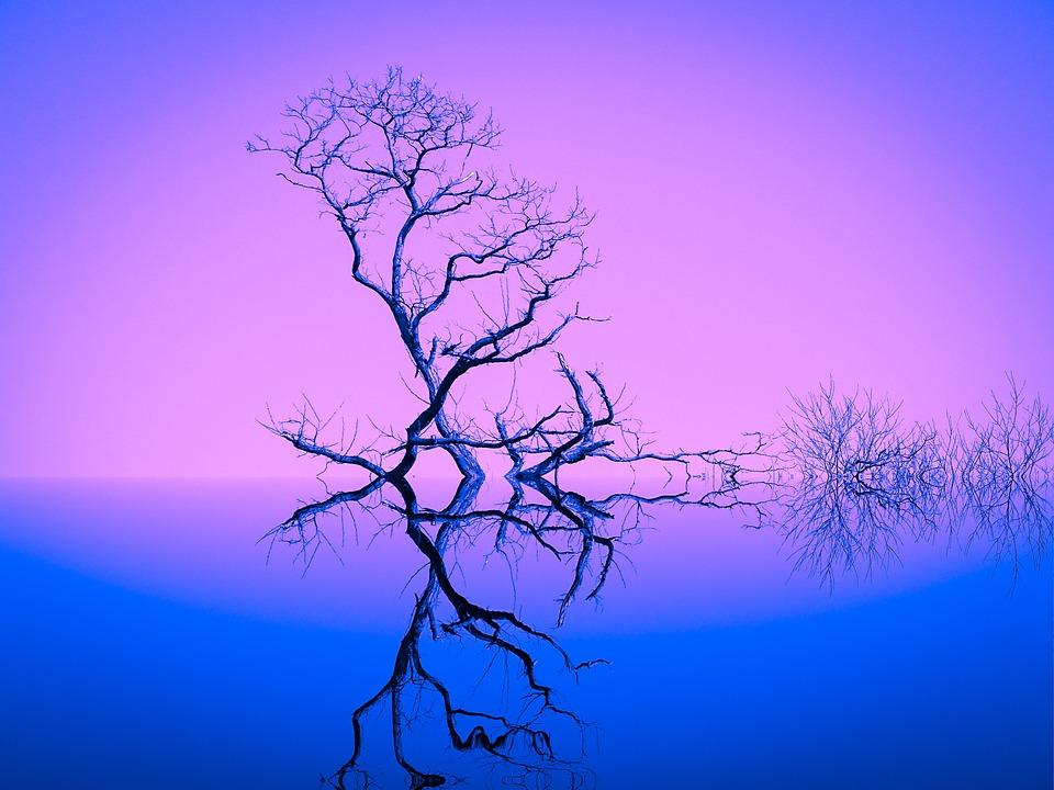 La Naturaleza, Inspiración, Árboles, Azul