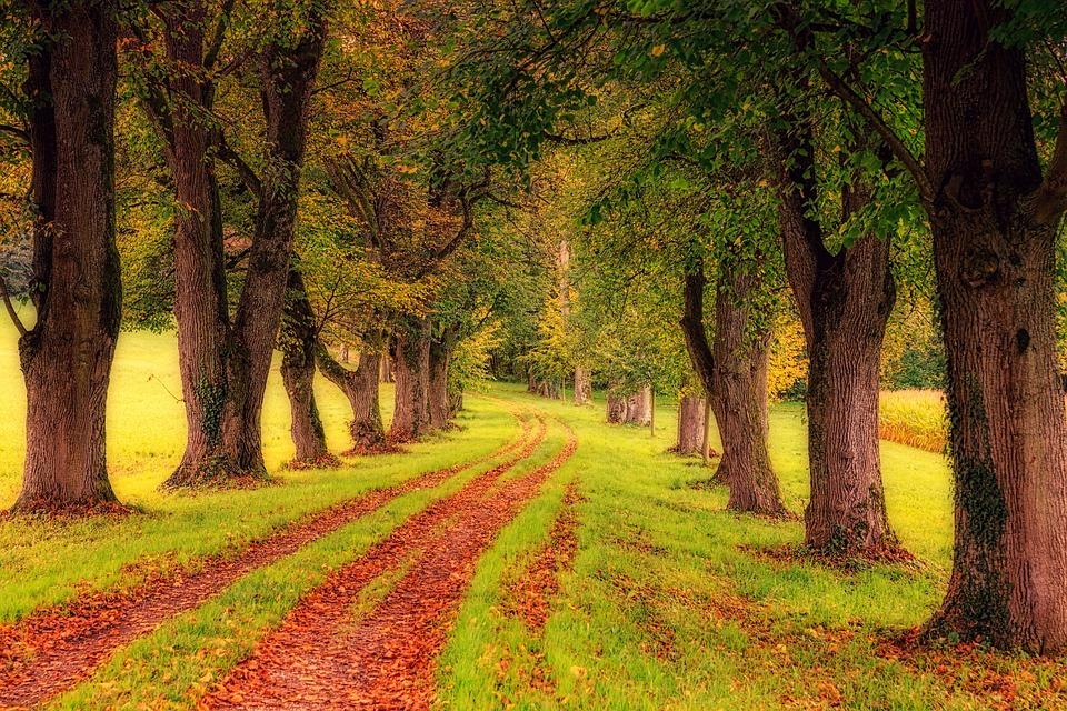 Jalan Berjajar Pohon, Taman, Pohon, Jalan, Alam