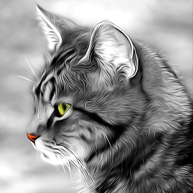 chat cher animaux de compagnie image gratuite sur pixabay. Black Bedroom Furniture Sets. Home Design Ideas