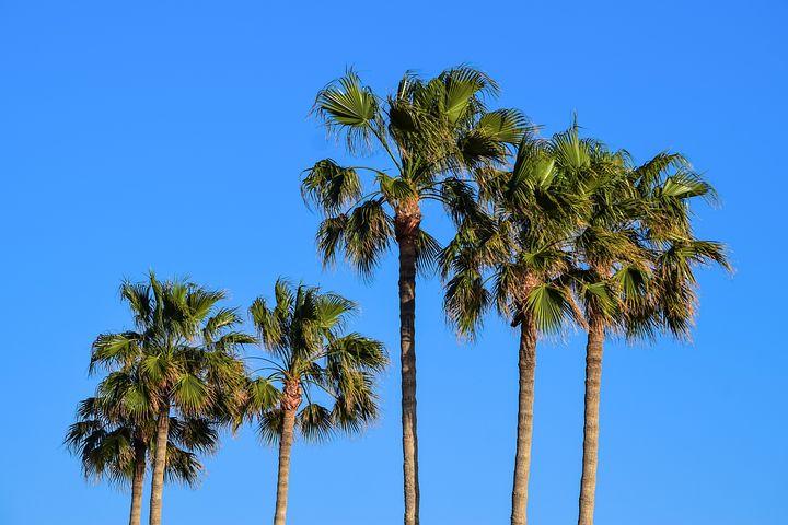 длинные картинки пальмы важно