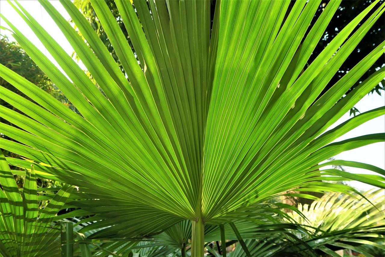 смотреть фото пальм тропических девочка, была