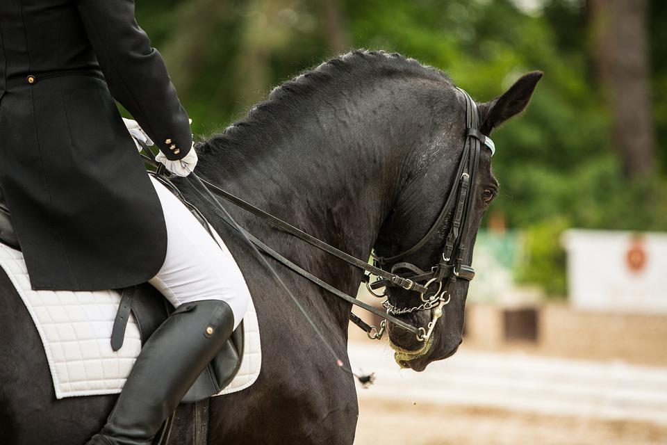 Horse, Rider, Horse Riding, Races, Head, Hands, Drezůra