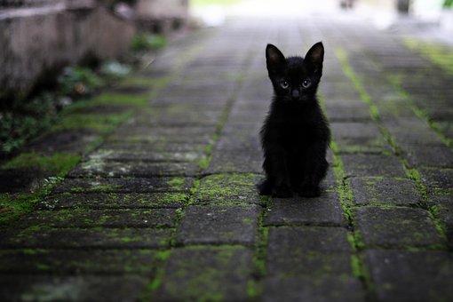 čierna mačička na čiernej mačička x hmster