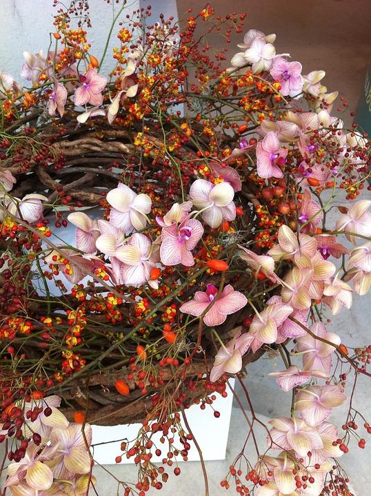 Fleur, Nature, Orchidées, Fruit De L'Églantier