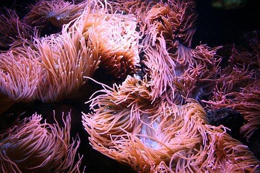 Underwater, Nature, Color, Ocean