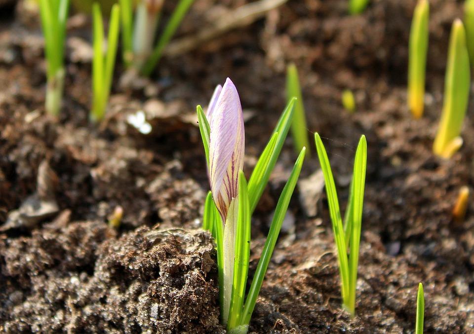 Krokus Early Spring Flowers Free Photo On Pixabay