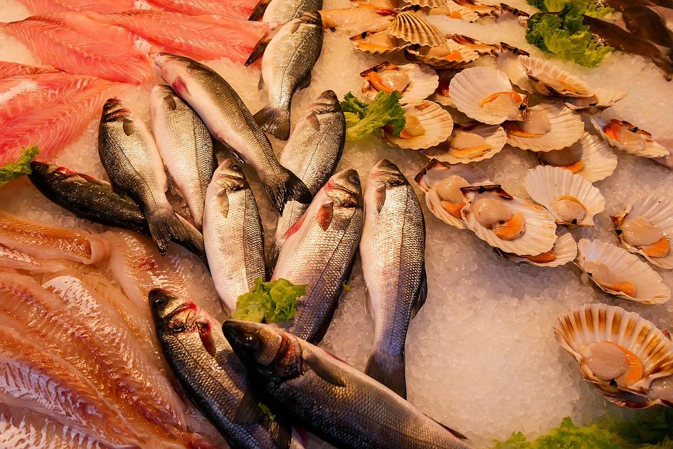 Comer, Pescado, Mariscos, Mar, Alimentos, Animales