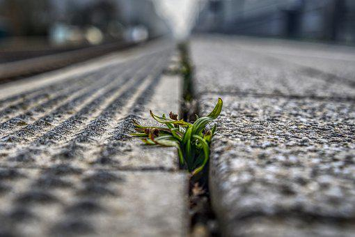 Platform, Weed, Plant, Green, Blurry