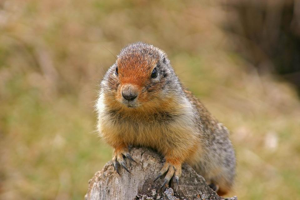 哺乳动物, 啮齿动物, 动物世界, 性质, 松鼠, 动物, 可爱, 小, 野生