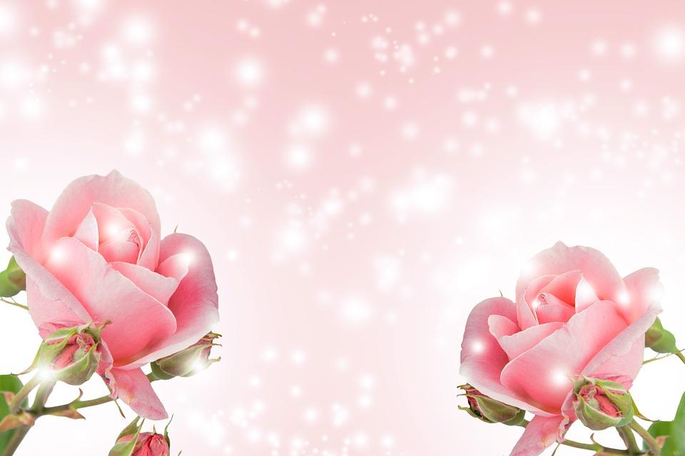 fundo flor flor natureza romance vero brilhante