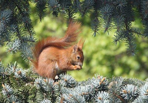 Lesne Zvierata Obrazky Pixabay Stiahnite Si Obrazky Zadarmo