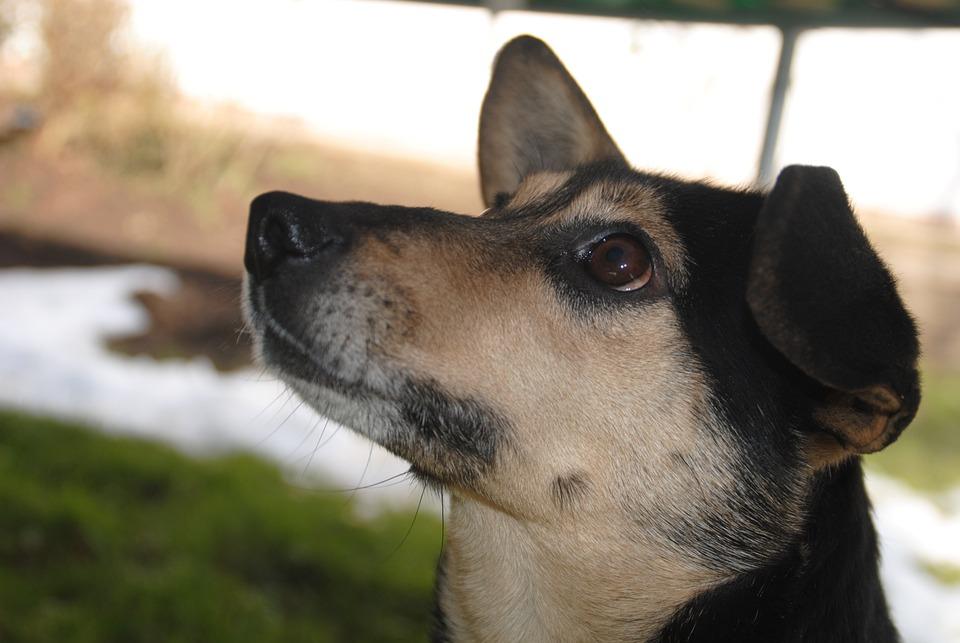 Los perros y su memoria