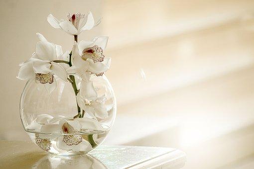 Geburtstag Blumen Bilder Pixabay Kostenlose Bilder Herunterladen