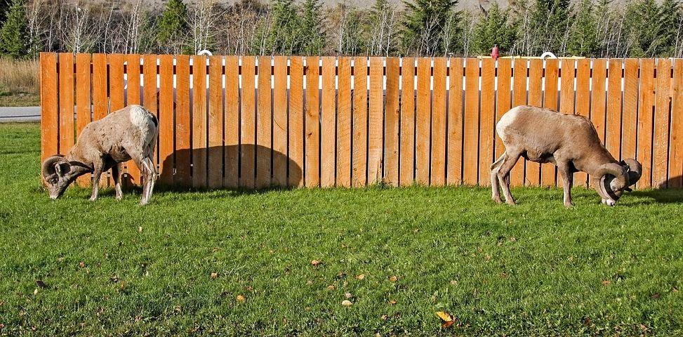 забор для животных картинки природе, жизни людях