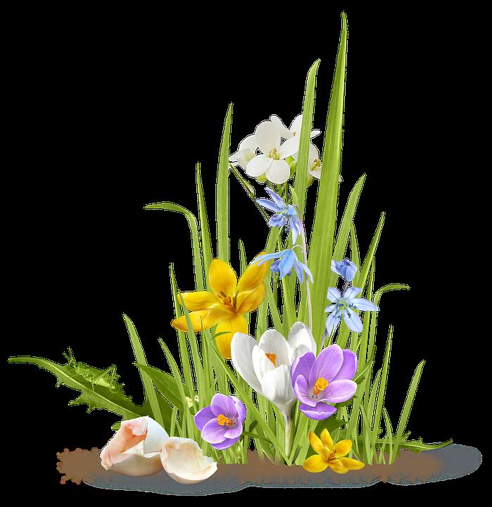 spring flower crocus free photo on pixabay
