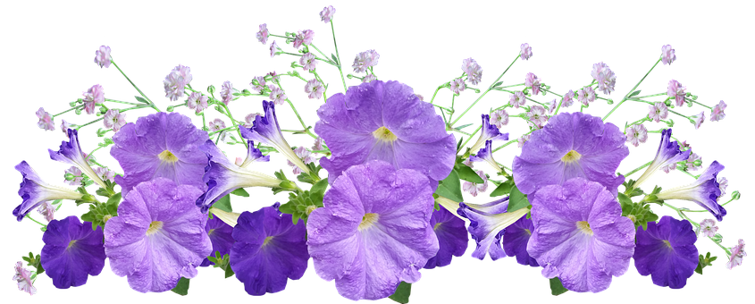 Petunia Images Pixabay Download Free Pictures