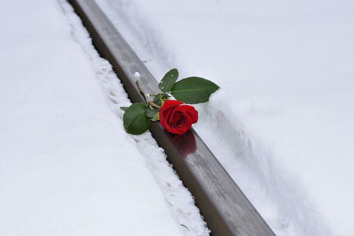 Картинки дорогая, картинки роза в снегу на ступени