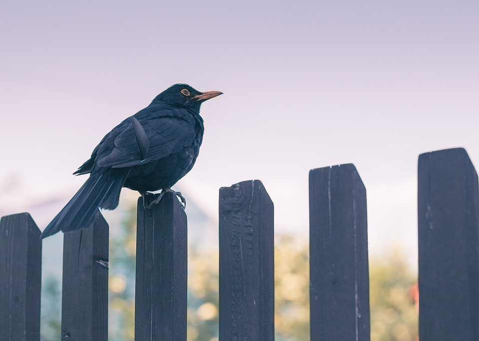 Things to Consider Before Fence installation
