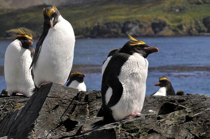назвала птицы антарктиды с названиями каждом