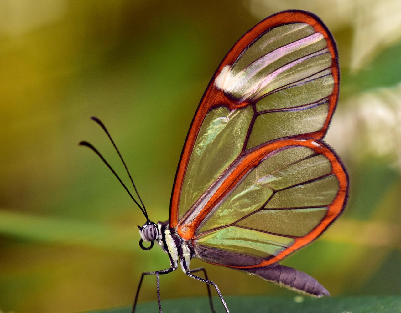 Картинки с прозрачными крыльями