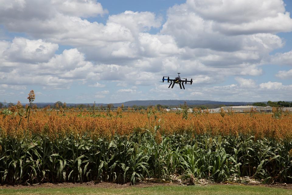 農業, 風景, ファーム, 作物, ソルガム, ドローン, 作, 穀物, 技術, 精密農業, Gps
