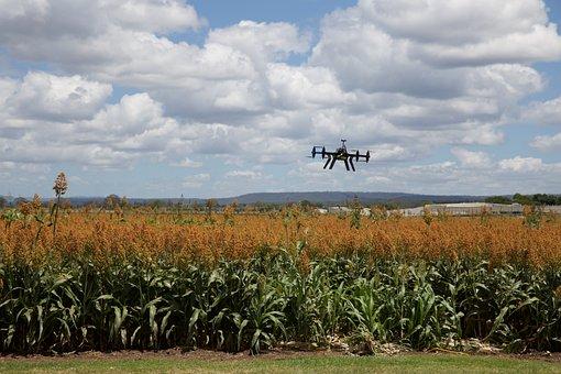 Agriculture, Landscape, Farm, Crop