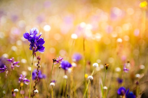 Orchids Images Pixabay Download Free Pictures