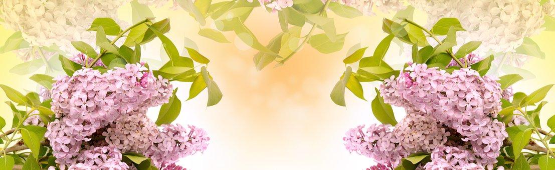 Lilac Flower, Flora, Nature, Leaf