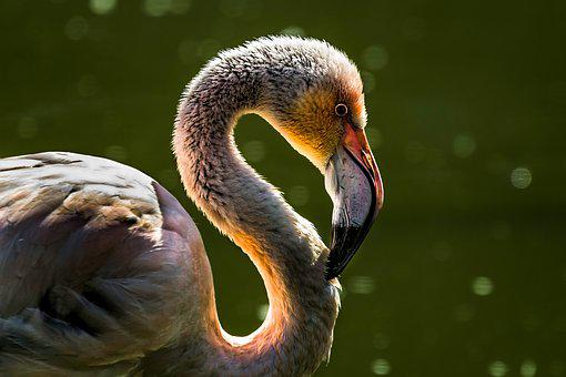 60,000+ Incredible Bird Pictures & Images [HD] - Pixabay - Pixabay