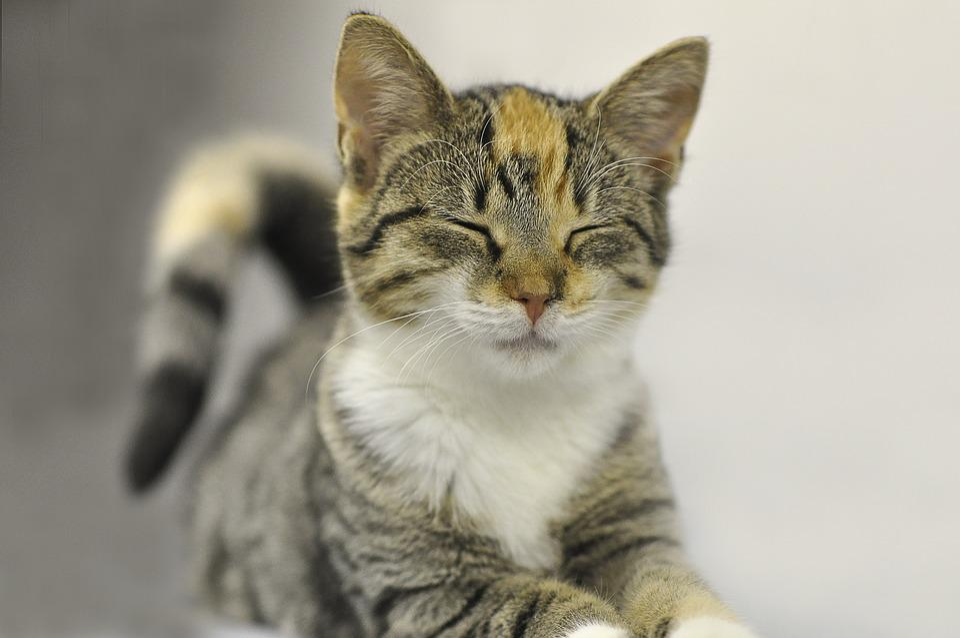 동물, 귀여운, 고양이, 포유류, 애완 동물, 고양이 새끼, 젊은, 작은, 사랑 스럽다