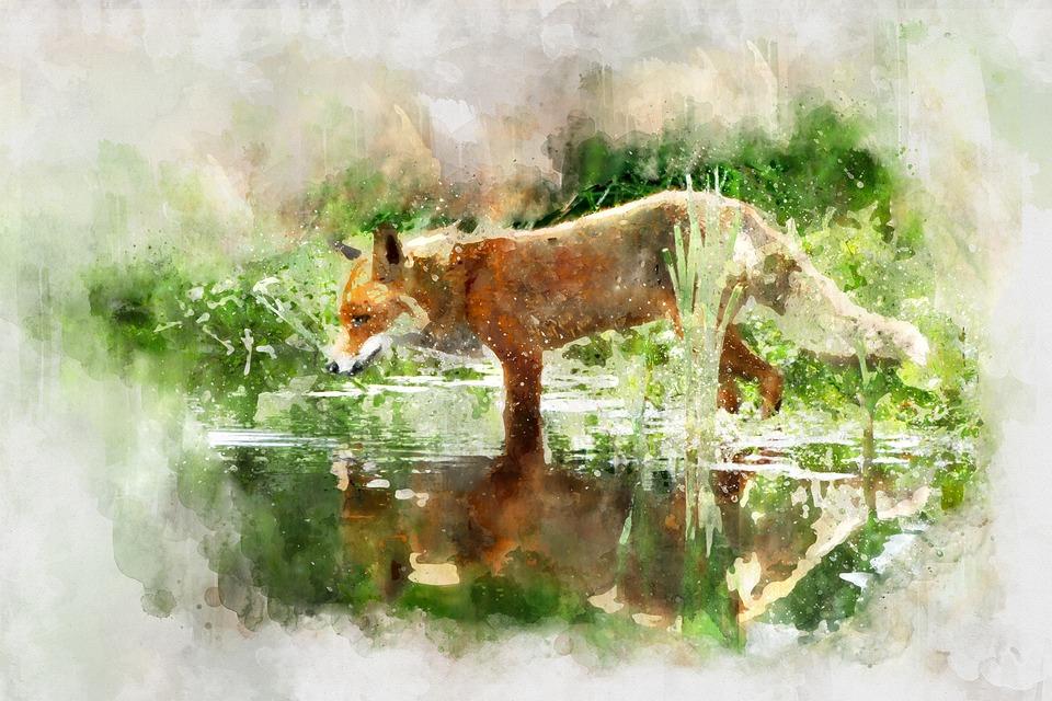 Fox Aquarela Animal Imagens Gratis No Pixabay