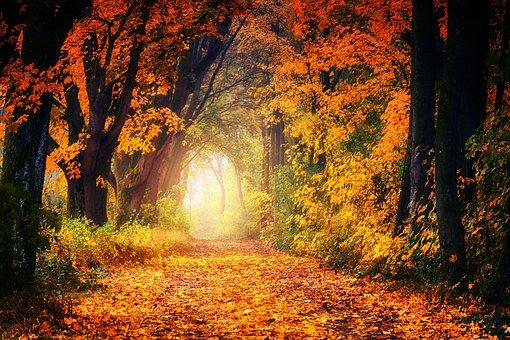 Podzim, Avenue, Pryč, Listy, Strom