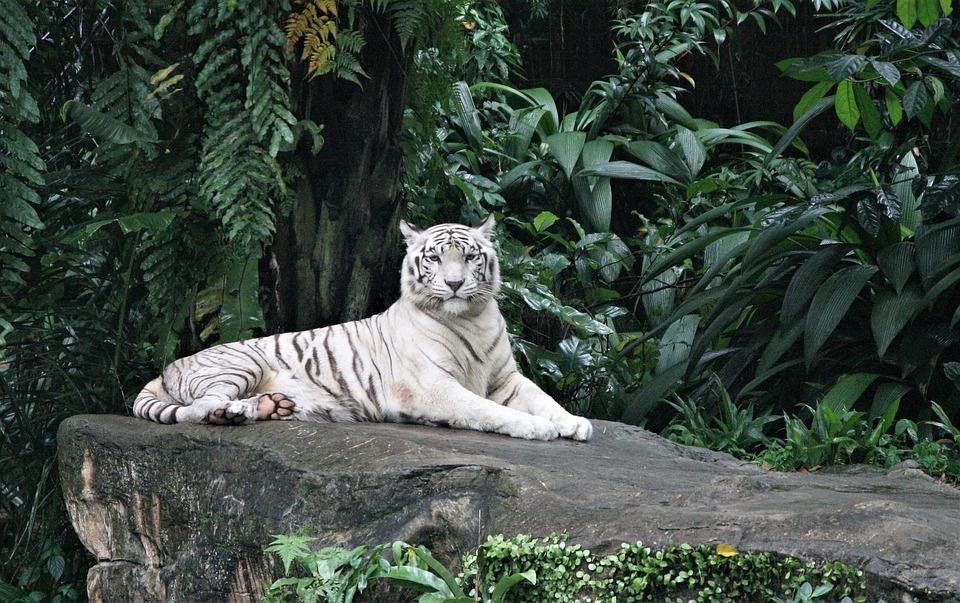 89 Gambar Alam Dan Binatang Kekinian