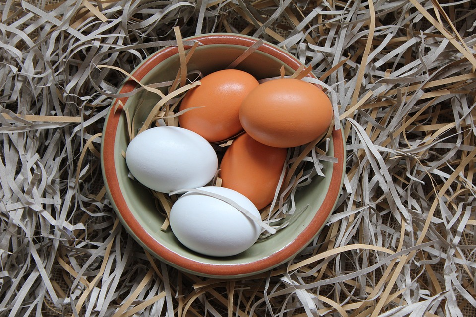 como cuidar das galinhas galinheiro